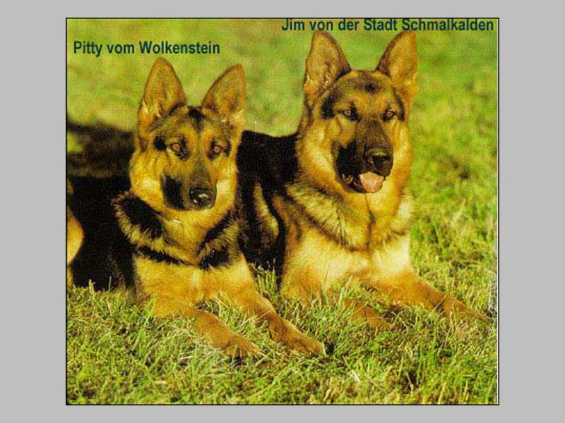 Pitty vom Wolkenstein (Ost)