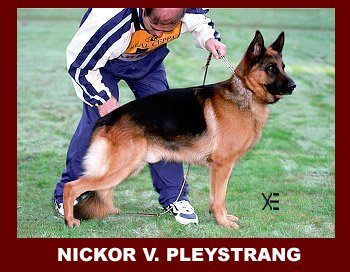 Nickor vom Pleystrang