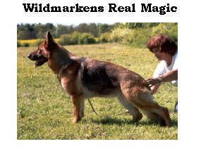 Real Magic Wildmarkens