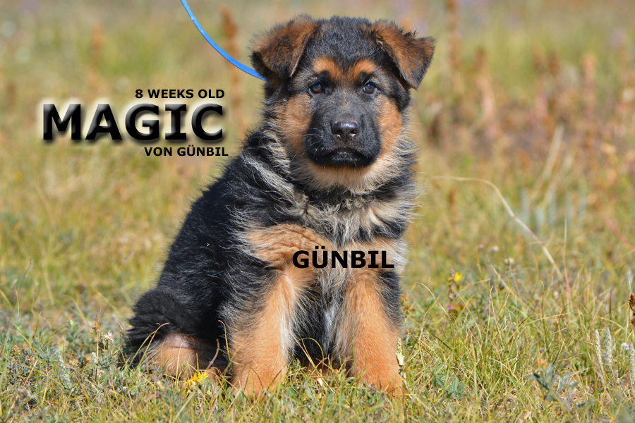 Magic von Gunbil