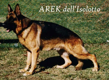 Arek dell Isolotto