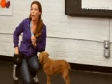 Dog Training: How t...