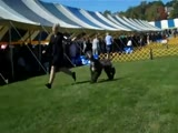 Afghan Hound Puppies at the Dog Show