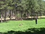 Major Puppy Beginning Obedience