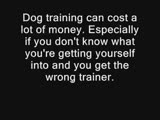 AFGHAN HOUNDS Owning  And Training