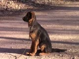 Jericho Beginning Puppy Obedience